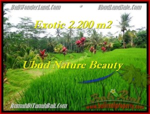 Exotic 2,200 m2 LAND IN UBUD FOR SALE TJUB480