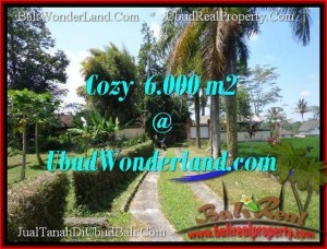 FOR SALE Beautiful PROPERTY 6,000 m2 LAND IN UBUD BALI TJUB507