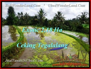 FOR SALE Exotic PROPERTY 21,800 m2 LAND IN UBUD BALI TJUB471