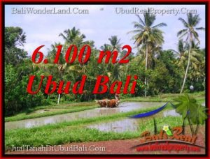 Beautiful PROPERTY 6,100 m2 LAND FOR SALE IN Ubud Tegalalang BALI TJUB552