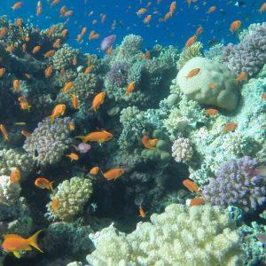 Ausflugstauchen in Ras Mohammed von Sharm El-Sheikh