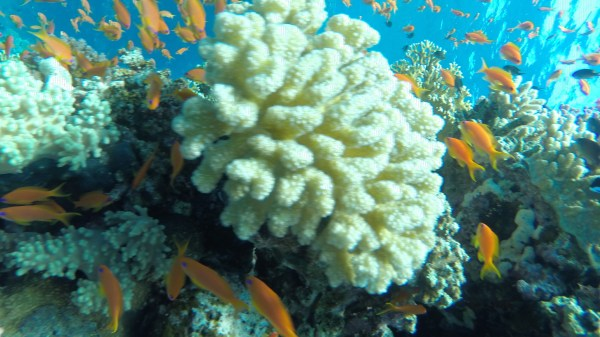 Excursions en mer à Charm el-Cheikh