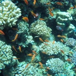 Excursión de buceo en Tiran desde Sharm el-Sheikh