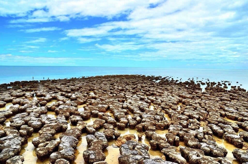 photo Stromatolite