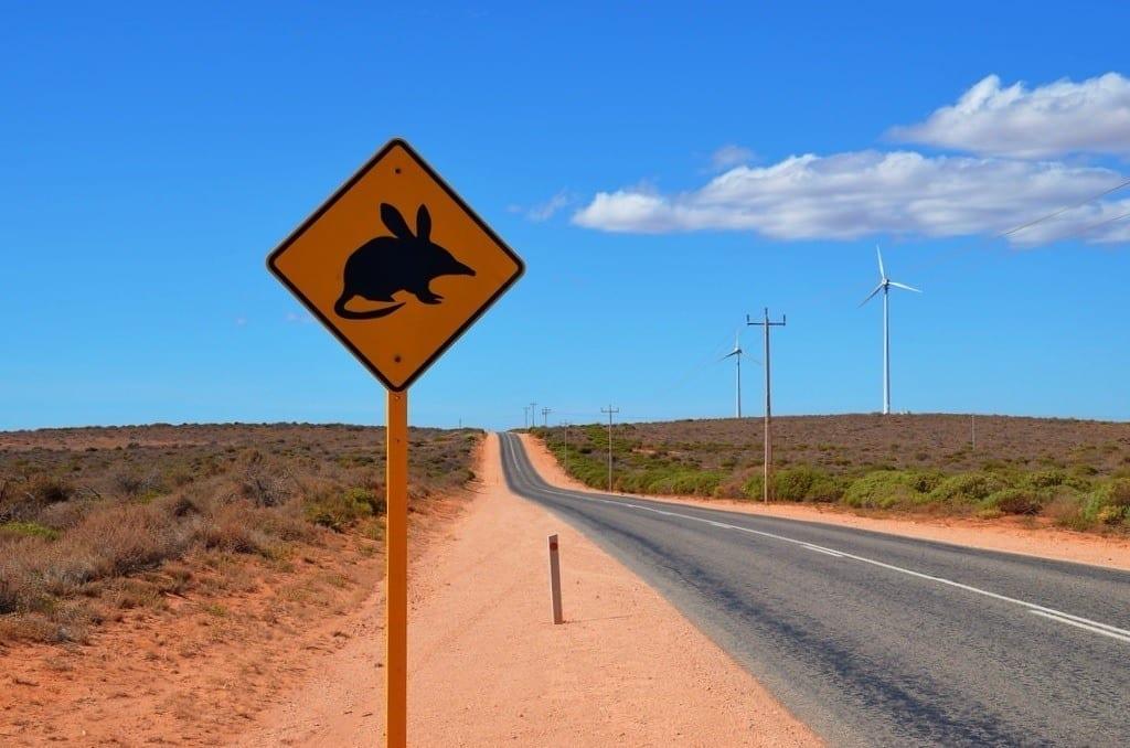 Bilby sign Australia