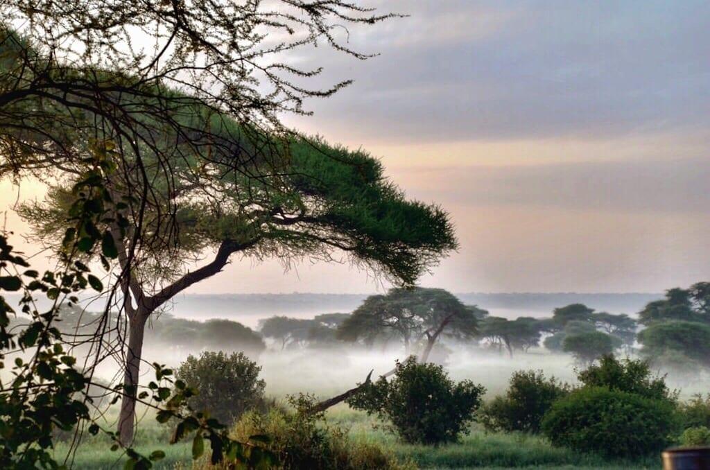 Sanctuary Swala Tanzania