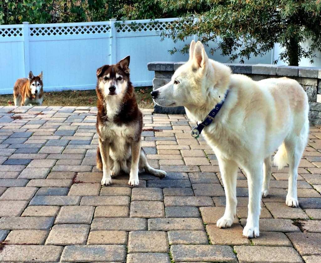 Moya Cody Preston Dogs
