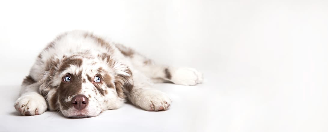 3 Ways to Keep Your Flooring Looking Its Best -- Even When You Have Pets
