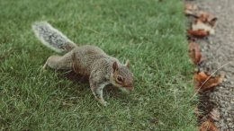 Squirrels - Some Unwanted Pests Have Fluffy Tails