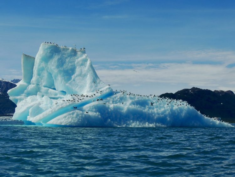 Iceberg with birds
