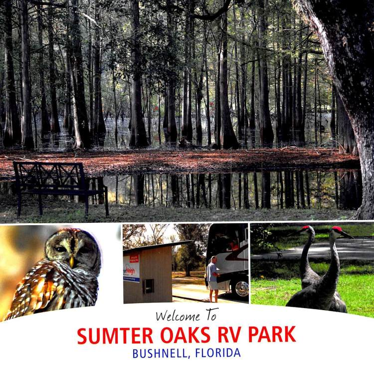 Sumter Oaks RV Park brochure cover