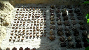 Unexploded cluster bombs being unearthed from a depth of two meters
