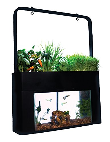 best self cleaning fish tanks of 2018 land of fish