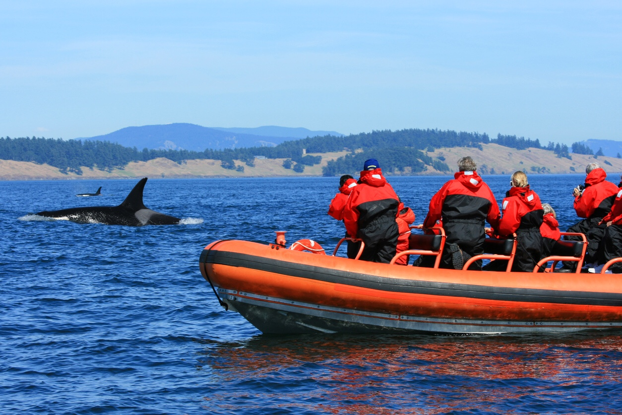 Tourists watching killer whales