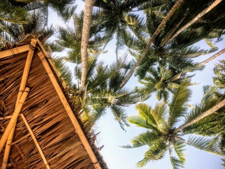 Palm trees at Ngapali Beach, Myanmar