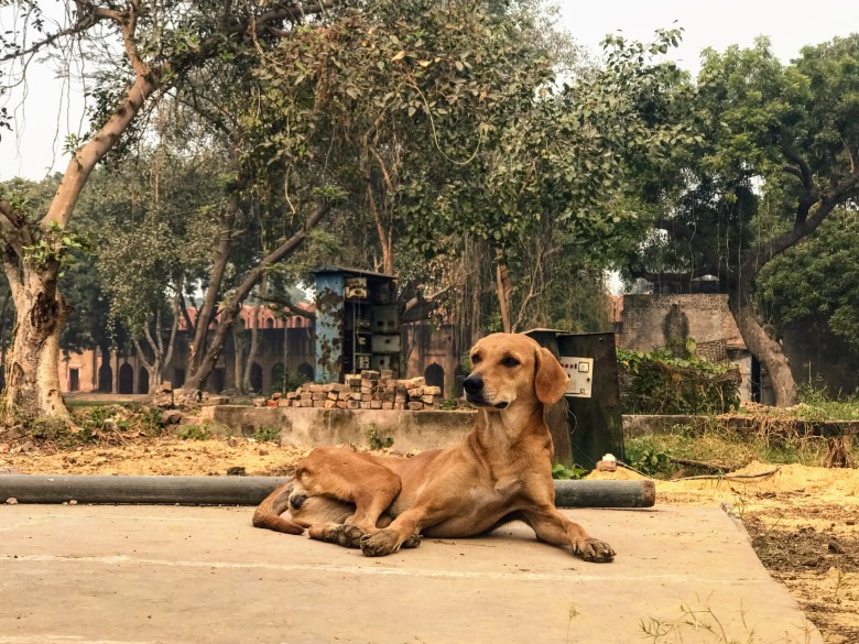 Stray dog at the Red Fort, Delhi, North India