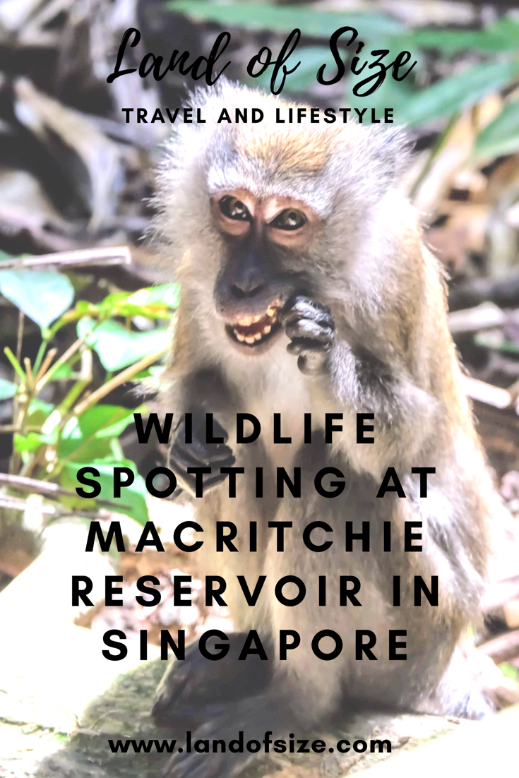 Wildlife spotting at MacRitchie Reservoir in Singapore
