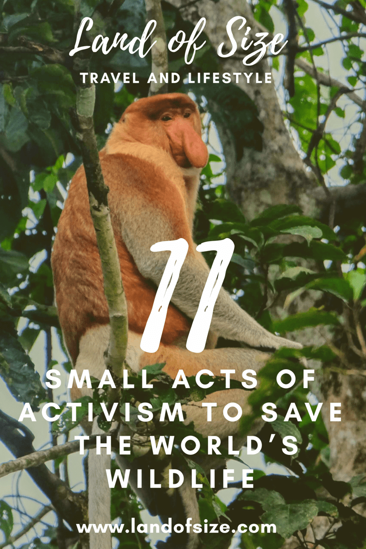 11 small acts of activism to save the world's wildlife