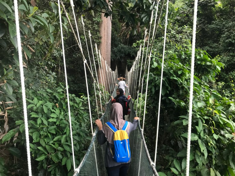 Canopy walkway at Poring Hot Springs, Borneo, Malaysia