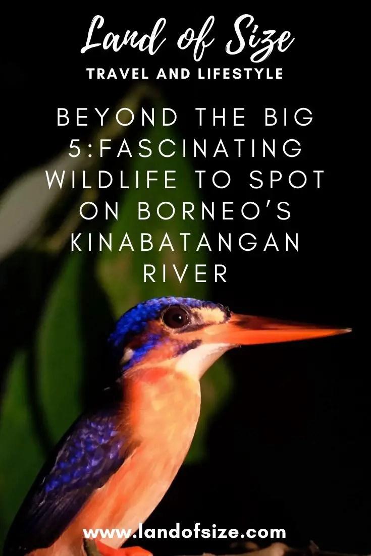 Beyond the Big 5: More fascinating wildlife to spot on Borneo's Kinabatangan River