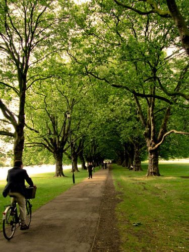 A picture of a cyclist on a pathway in Jesus Greens in Cambridge
