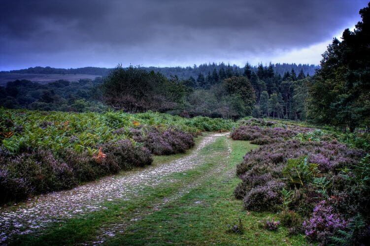 A shot of what new forest in england looks like at sunrise