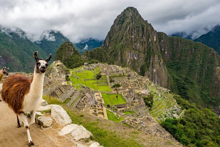 A lama beside the Incan ruins at Machu Picchu
