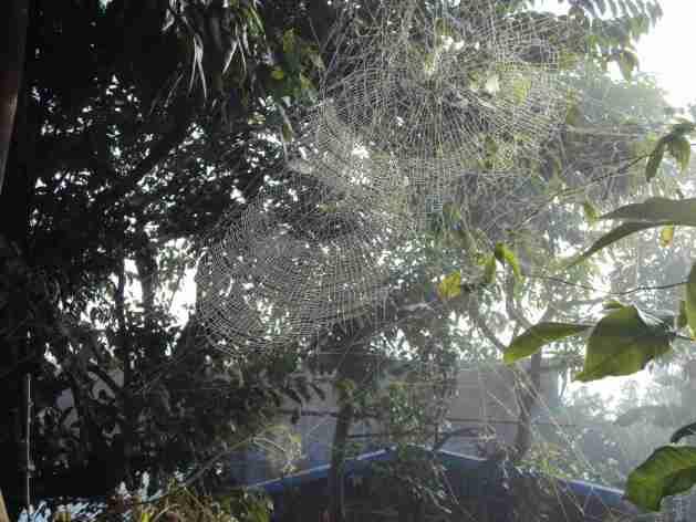 Spinnweben im Morgennebel