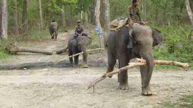 Arbeits-Elefanten