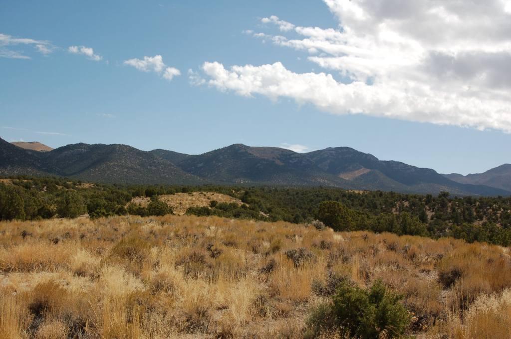 Nevada 40 Acres