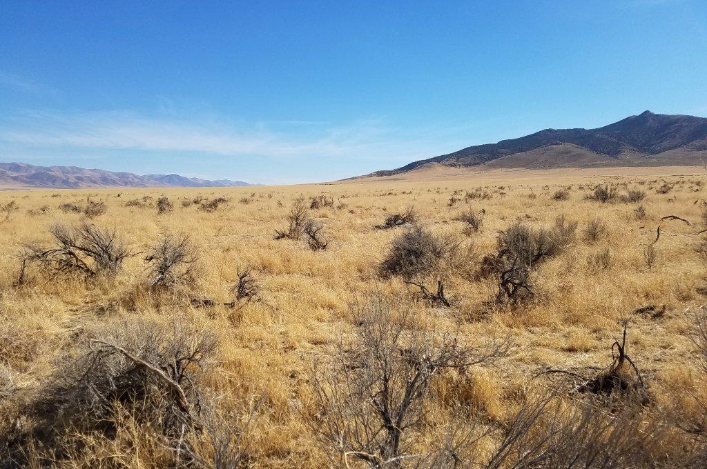 Winnemucca Land for Sale