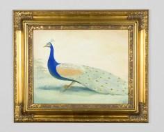peacock-flat