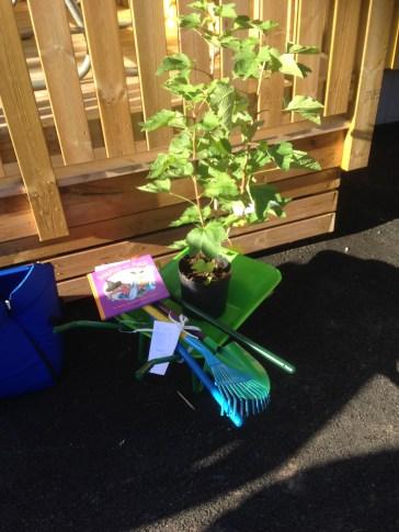 Kommunens gåva till förskolan. En vinbärsbuske och verktyg så barnen kan plantera den. Kommer smaka gott nästa höst.