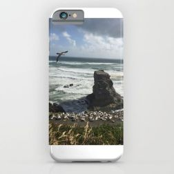 muriwai-beach-cases