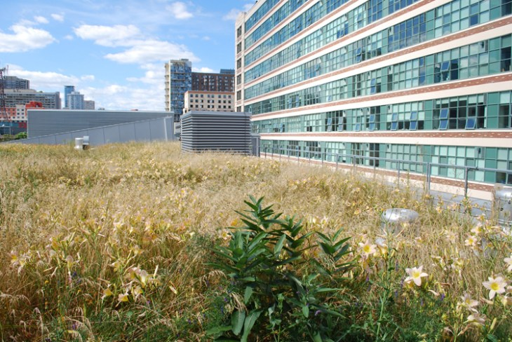 Ryerson University's green roof transformation.