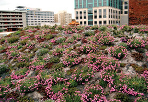Green Roof Demand Growing Leaps And Bounds