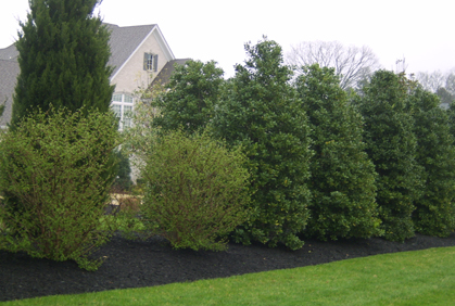 Types Of Trees For Landscaping Most Popular 2016