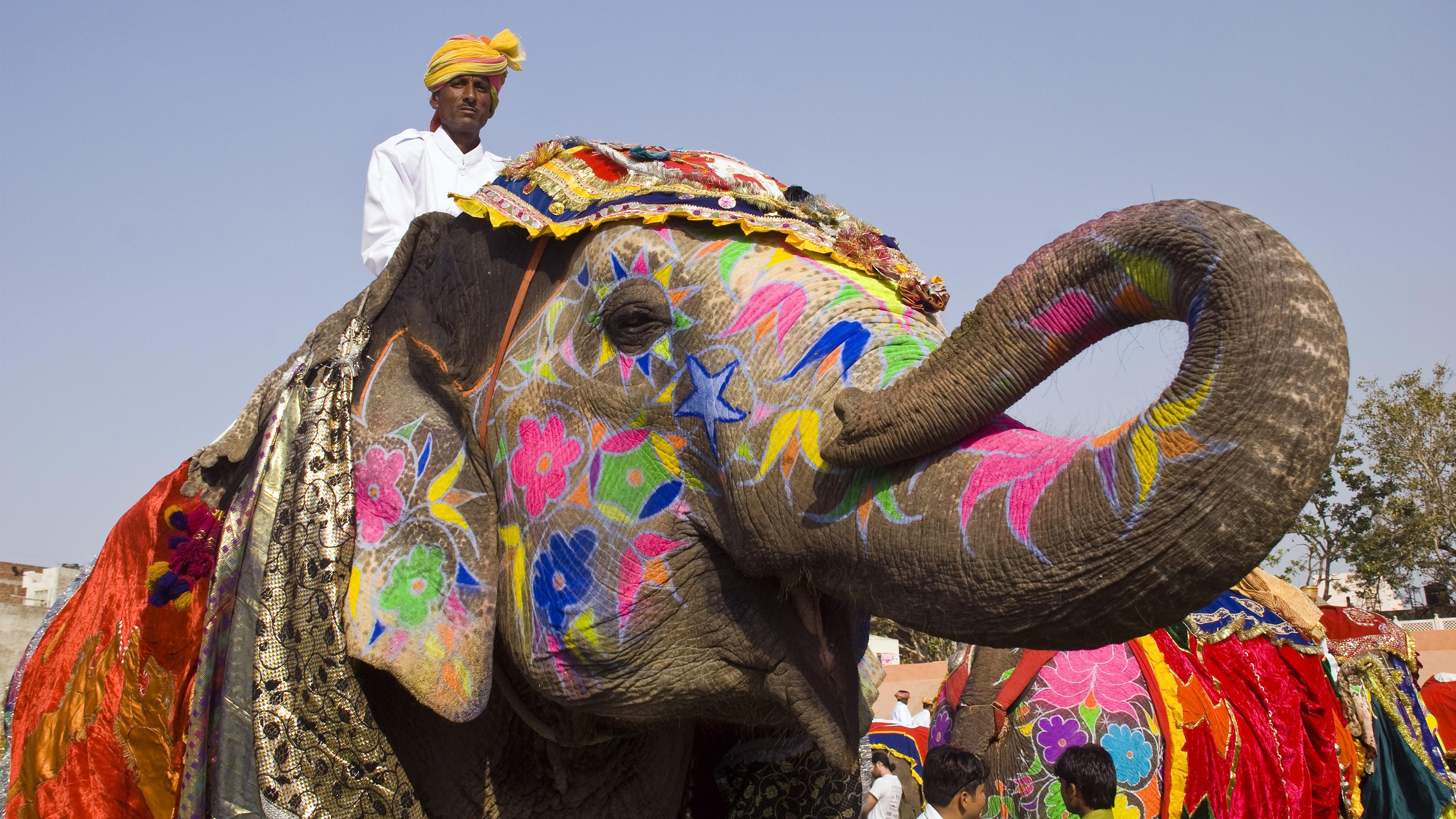 Decorated Elephant, Rajasthan 16-9