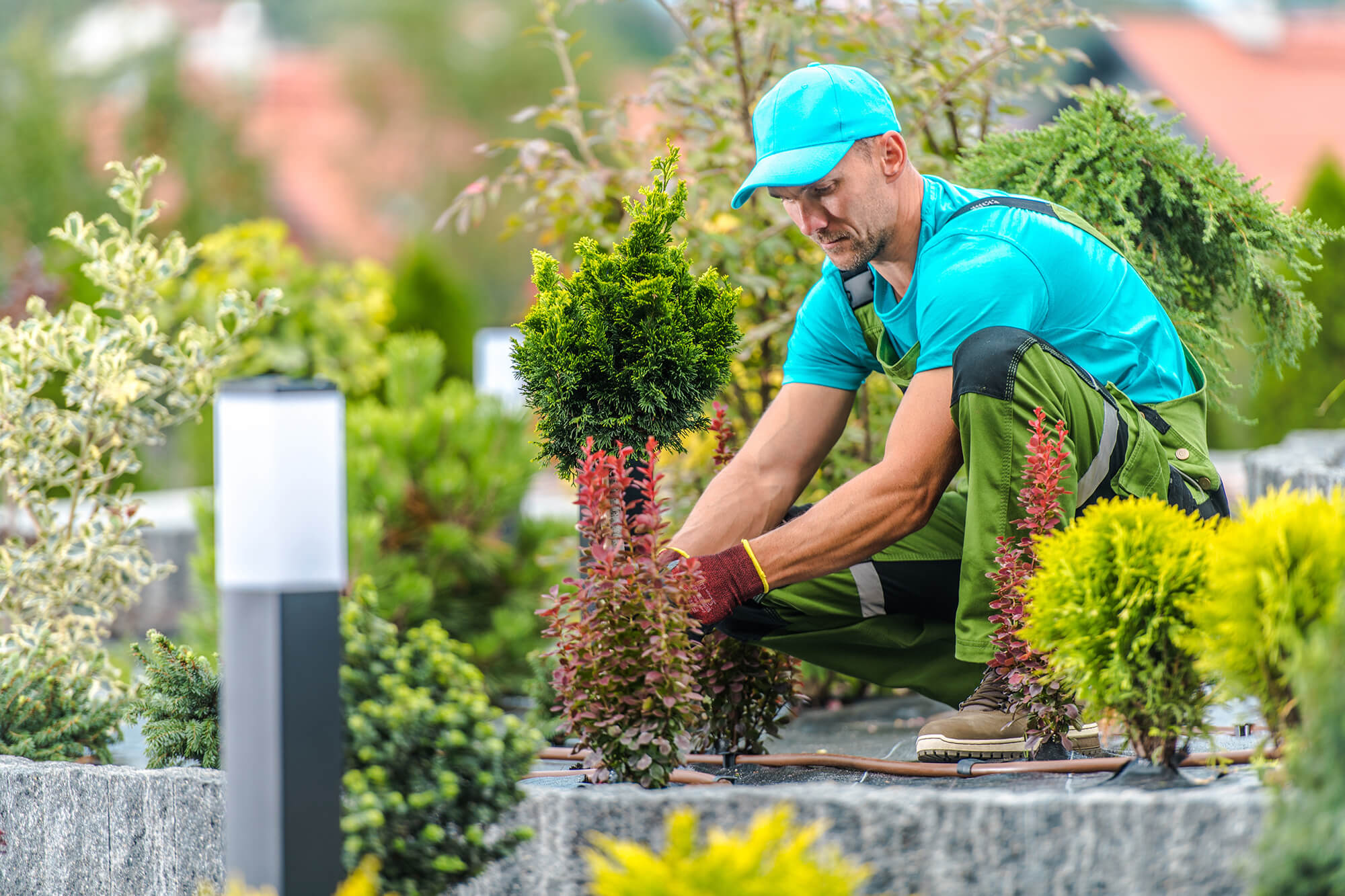 Male landscaper wearing a blue ball cap and blue t-shirt works in garden