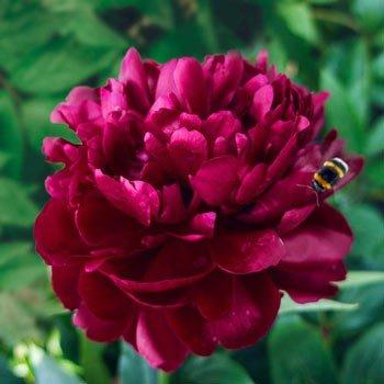 Bulb Photos, Bulb Photos, Landscape Pros | Landscape Design & Landscaping Services Manassas, VA