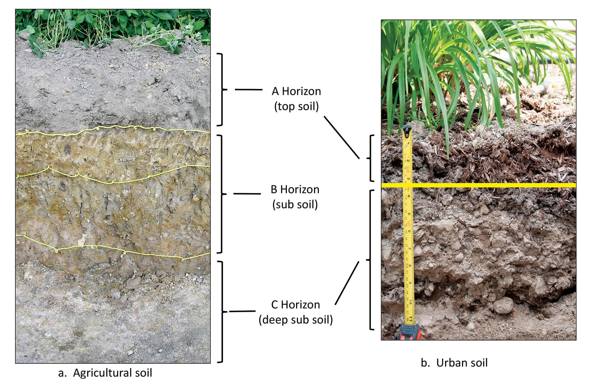 Urban Soils Naturally Unnatural