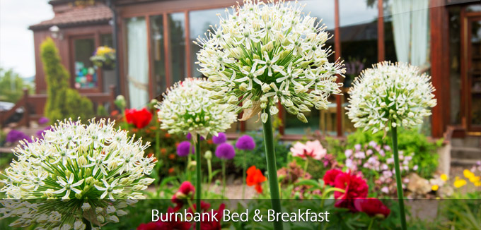 Burnbank 3
