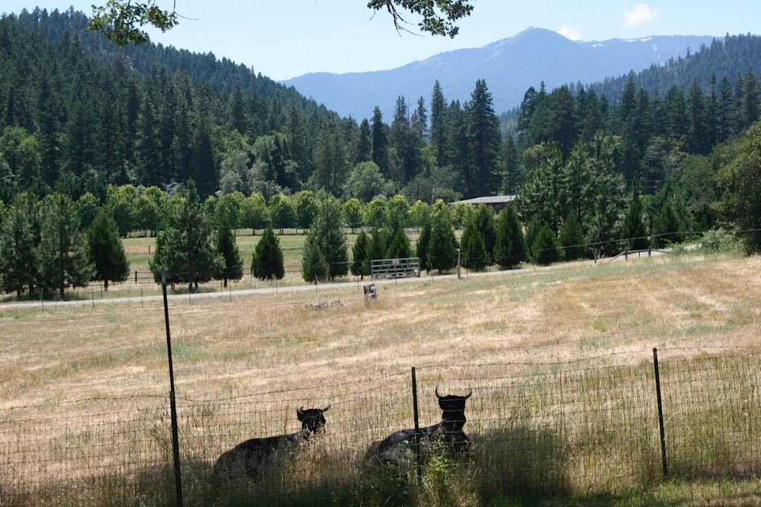 Restoration Agriculture: Pasture with conifer wild break