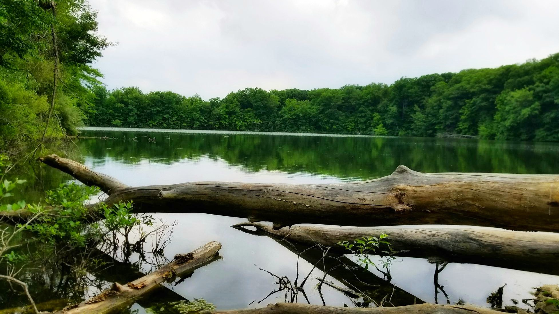 Oxbow Lake ©Mary Fry Comden
