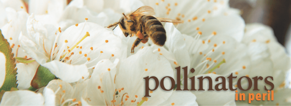 Why we all should care about POLLINATORS