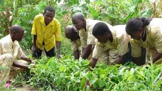 baeume-als-natuerlicher-duenger-wiederaufforstung-in-afrika