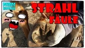 strahlfaeule-erkennen-und-behandeln-pferde-hoschi