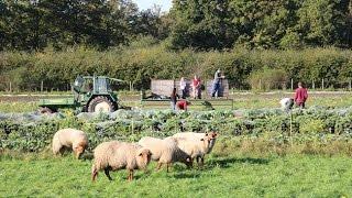 alternative-formen-der-landwirtschaft-werkstatt-zukunft