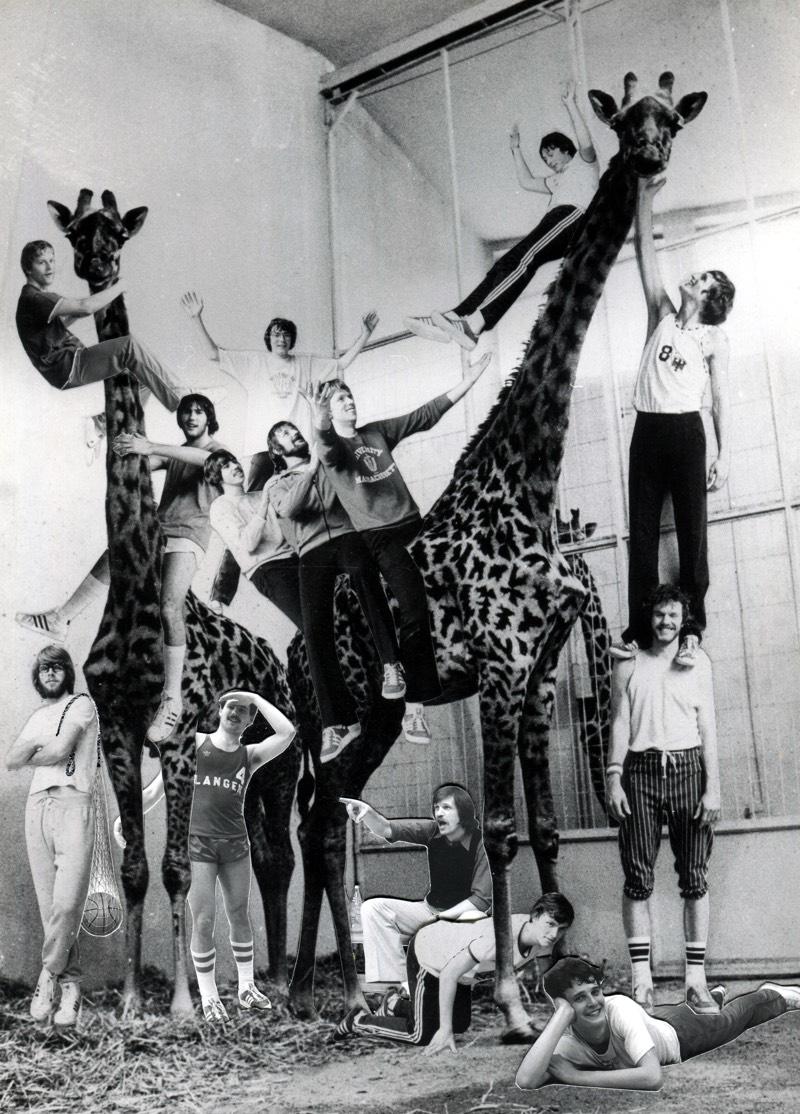 7_ Langener Giraffen_eine Marke