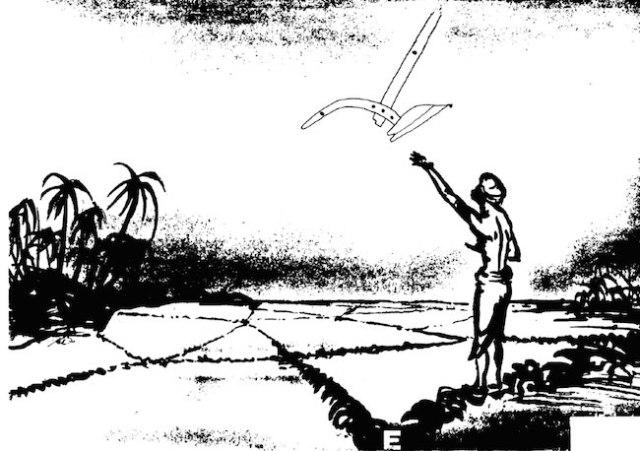 Ilustrasi Petani yang sedang mengenggam beras di tangan, mengarahkan tangan ke Rasi Waluku yang baru terbit. Jika beras mengalir turun dari tangan, maka keesokan harinya musim menanam sudah dapat dimulai. Ilustrasi bajak dibuat berdasarkan ilustrasi yang dibuat Raffles dalam buku History Of Java. Sumber gambar: Gene Ammarell / Sky Calendars of the Indo-Malay Archipelago: Regional Diversity/Local Knowledge